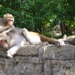 Monkeys in Monkey Temple, Swayambhunath Kathmandu