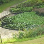 The water lily pond from the formal garden