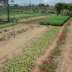 Organic herbs!