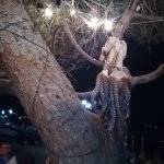 Photo of The Octopus Tree