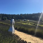 Pelindaba Lavender Farm Photo