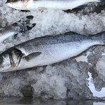 My sea bass