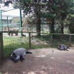 Foto de Zoo de Santillana