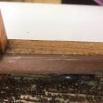 woodlice on the windowsill