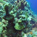 Zdjęcie Coral Paradise Resort