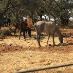 Foto de Reservatauro Ronda
