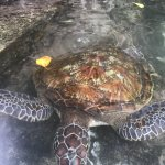 Nungwi Natural Aquarium Foto