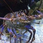 Photo de Mote Marine Laboratory and Aquarium