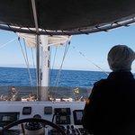 FreeBirdOne Whale and Dolphin Excursion Photo