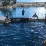 Photo de Dolphinaris Cozumel