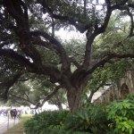 Foto de Alamo Plaza