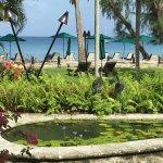 Billede af The Reef Restaurant at Coral Reef Club