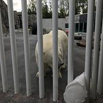 Photo de Alaska Zoo