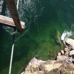Bild från Kootenai Falls Swinging Bridge