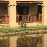 Foto de The Kingdom at Victoria Falls