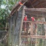 Foto de Villa Maya