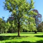 magnifique arbre du parc