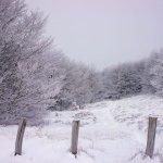 Monte Falco in veste invernale