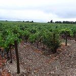 Avignon Wine Tours Foto