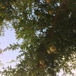 Photo of Agriturismo La Fiumara