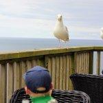 Food/balcony/seagulls