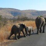 Photo de Ivory Tree Game Lodge