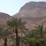 Photo de Ein Gedi Spa