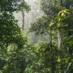 Photo of Danum Valley Conservation Area