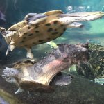 Turtles at Como Zoo, Minnesota. Ketan Deshpande, MN