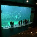 Photo of Nordsoen Oceanarium