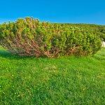 Il Pino mugo nel Parco della Majella