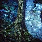 Photo de Parc de la Gorge de Coaticook