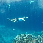 Under the sea, Keyhole Island bird preserve