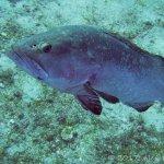 Photo de Nautilus Diving Center