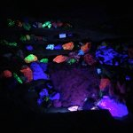 Photo of some rocks under UV light