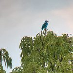 Foto de La Selva Amazon Ecolodge