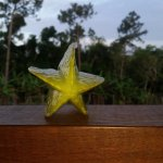Some fresh star fruit picked fomr the garden