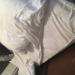 Bed Bugs - Celadon #604