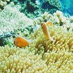 Mai Dive - Astrolabe Reef Resort resmi