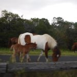 mother and colt- national park