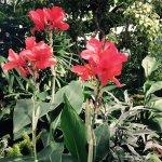 Foto di Niagara Parks Floral Showhouse