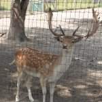 Mr. Deer