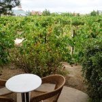 Villa room-gorgeous patio overlooking the vineyard, complimentary bottle of wine upon check in a