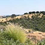 Paso Robles / Classic California Views