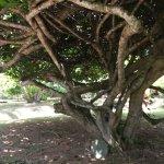 Bild från Dalmanuta Gardens - Ayurvedic Resort & Restaurant