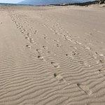 Photo de Patara Beach