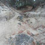 """cesta """"piniovým hájem"""" na pláž :-)"""