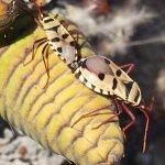 Foto de Welwitschia Plains, A Scenic Drive