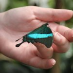 Zauberhafte Welt der Schmetterlinge