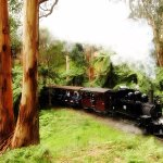 The magical steam train ride, Puffing Billy on our private Mt. Dandenong tour.